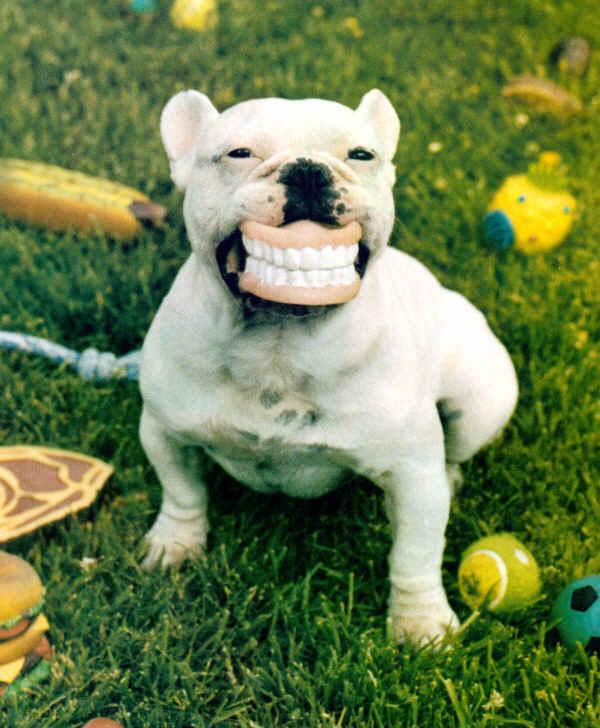 dog_denture