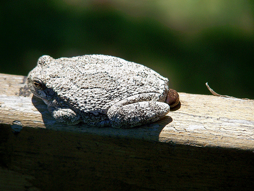toad-pooping-flickr